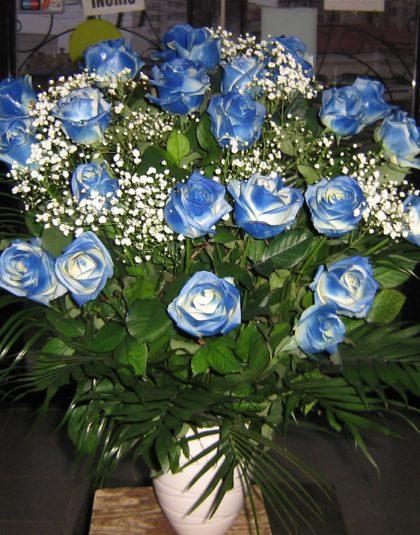 Trandafiei albastri in vas ceramic
