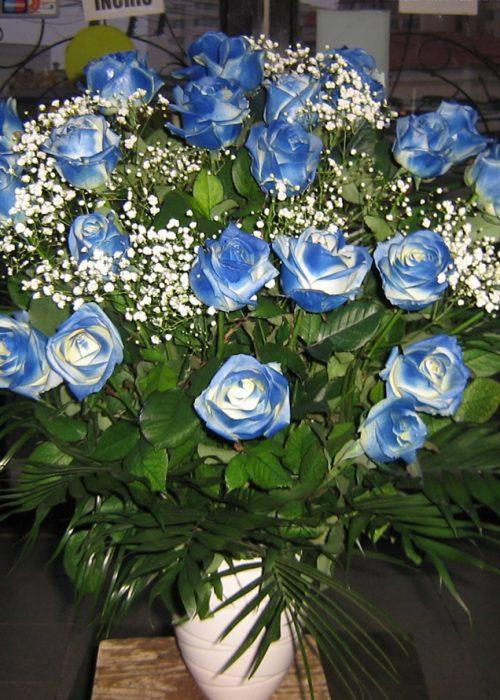 AFN-02 Aranjament 21 trandafiri albastri in vas ceramic cu g